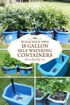 Many versions of self watering containers, also known as self watering grow boxes, self watering pots, and self watering planters are sold online, but you can make them yourself for a fraction of the cost out of some easy to find items. Container Garden G Diy Self Watering Planter, Self Watering Containers, Water Containers, Growing Tomatoes In Containers, Watering Cans, Organic Gardening, Gardening Tips, Vegetable Gardening, Urban Gardening