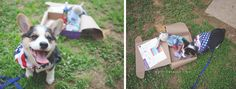 That's So Fetch   Pup Box Subscription Review + Coupon Code   www.amylorraine.com