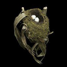 ムナフチャツグミ(Spotted Nightingale)