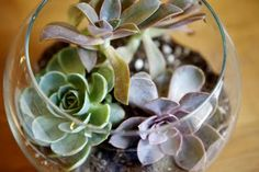 We're thinking of having bowl/glasses as center pieces and filling them with succulents and sand.