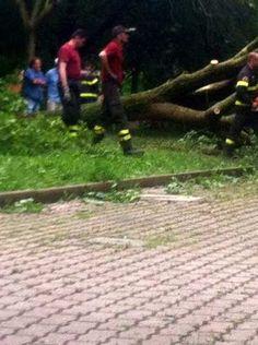 Emilia #Romagna: #Incidente sul lavoro operaio schiacciato da albero a Pianoro (link: http://ift.tt/2lX520O )
