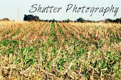 Fall - Shutter Photography Shutter Photography, Shutters, Fall, Plants, Outdoor, Blinds, Autumn, Outdoors, Shades