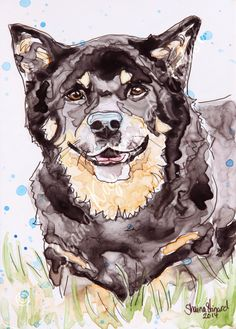 CUSTOM MIXED MEDIA SKETCHES / WATERCOLOR SKETCHES ON YUPO PAPER / PET PORTRAITS / DOGS by Shaina Kay Stinard - Artist.   www.shainastinardartist.com   Making your photos a work of art!   'Loki' - 5 x 7 pen and ink with watercolor on YUPO paper