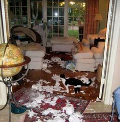 Guess they found the new package of toilet paper.