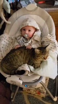 Baby making biscuits on a cat - Gatos Graciosos Funny Animal Videos, Cute Funny Animals, Cute Baby Animals, Animals And Pets, Funny Cats, Funny Videos, Baby Animals Pictures, Funny Animal Pictures, I Love Cats