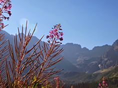 Ruda z wyboru: Wycieczki w Tatrach polskich dla POCZĄTKUJĄCYCH - propozycje vol. 1 Polish Mountains, Nature, Plants, Blog, Travel, Naturaleza, Viajes, Blogging, Destinations