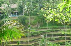 Spatious retreat in a unique location in a traditional Balinese village near Tegallalang 20 minutes north of Ubud