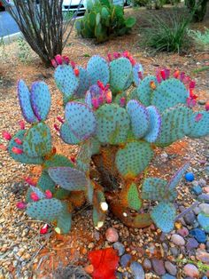 - Succulent Bonsai, Succulent Gardening, Succulents Garden, Garden Plants, Nature Plants, Desert Plants, Cool Plants, Cactus Decor, Cactus Plants