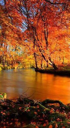 767 best fall scenery images on pinterest scenery autumn scenery