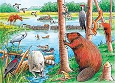 Find amazing The Beaver Pond, A 35 Piece Tray Puzzle by Cobble Hill beaver gifts for your beaver lover. Beaver Animal, Teddy Bear Cartoon, Teddy Bears, Up Theme, Animal Hats, Bear Art, Fun Challenges, Puzzles For Kids, Travel Activities