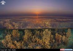 Sunset in Aljazair Beach -   Kingdom of Bahrain