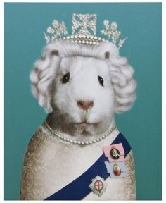 Empire Art Direct Pets Rock HRH Graphic Art on Wrapped Animal Canvas Wall Art, Size: x x Green Hamsters, Pig Art, Expo, Animes Wallpapers, Guinea Pigs, Pet Portraits, Canvas Wall Art, Canvas Canvas, Wrapped Canvas