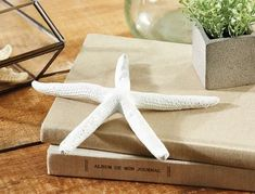 Home Decor - Home Decor Decorative Objects, Decorative Accessories, Home Accessories, Home Decor Online, Chair Pads, Large White, Throw Rugs, Starfish, Decorating Your Home