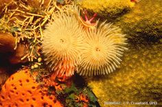they live in the intertidal zone and subtitle
