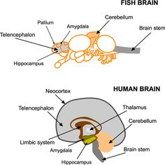 Fish dissection images for school pinterest for Do fish feel pain