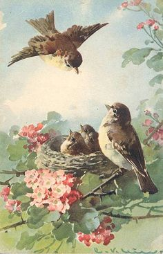 Vintage postcard For a romantic tale about bird watching try http://elizaredgold.com/romance-novels/