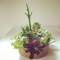 特盛りシリーズ。器はアラビアのアンティーク。 #succulent