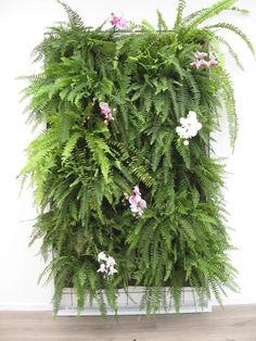 jardim vertical orquidea - Pesquisa Google