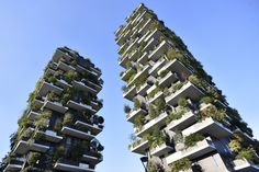 """Milan is growing """"green forest"""" sky scrapers. These towers are in more than 700 trees, encompassing 90 species of plants. These trees benefit the city as they reduce smog, create oxygen, regulate temperature, and dampen noise levels. It is truly a great balance between nature and urban society."""