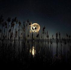 Full moon over dark night water Moon Moon, Blue Moon, Moon Rise, Dark Moon, Moon Art, Good Night Moon, Dark Night, Shoot The Moon, Moon Pictures
