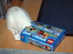 Where's the LEGO?