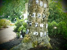 Decorated A Tree Entering Our Backyard Garden Party On Winding Path With Black White Anniversary Photos25th