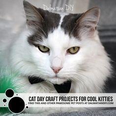 Cat Day Crafts for Cool Kitties - Dalmatian DIY Cat Nutrition, Cat Grass, Cat Garden, Outdoor Cats, Cat Boarding, Dalmatian, Cat Toys, Cat Lovers, Kitty