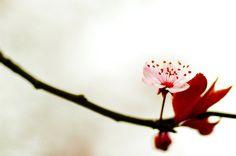 Sakura 4 by *nabi4 on deviantART