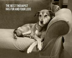dog therapy - they don't judge, just love