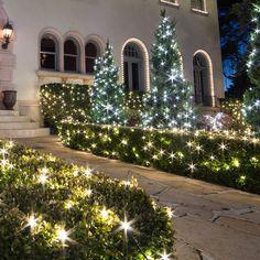 Christmas Bush Lights.How To Control Christmas Lights Istock 000022571023xlarge