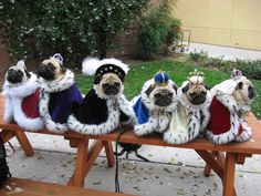Their royal pugnesses...looks like Henry The 8th and his Queens.