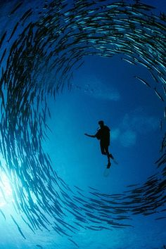 Scuba diving looks amazing, it's like another world in the water.