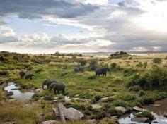 Masai Mara National Park Kenia