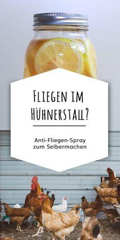 Aus Zitronen, Vanille und Zimt läßt sich ein fein duftendes Reinigungsmittel für den Hühnerstall herstellen. Als Spray verwendet kann man es in der Hühnerhaltung uns im Haushalt als Anti-Fliegen-Spray einsetzen.