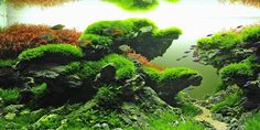 Taiwanese aquascaping style was once very popular among the aquascaping community; however, in recent years its uptake has seen a decline. Live Aquarium, Planted Aquarium, Aquarium Fish, Aquarium Landscape, Nature Aquarium, Colorful Fish, Tropical Fish, Aquascaping, Amazing Aquariums
