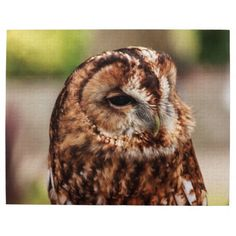 Brown Barn Owl Jigsaw Puzzles