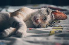 10 Consejos para dormirte más rápido y despertarte fresco como una lechuga