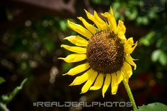 Calm, Peaceful, and Untroubled! #Peace #RealDealPhotos  https://www.facebook.com/RealDealPhotographs/photos/?tab=album&album_id=1780620508842462&pnref=story