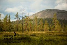 Ylläs fell, Finnish Lapland. Photo by Jani Kärppä. #filmlapland #arcticshooting #finlandlapland