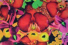 Title: Portraits of Landscapes   Medium: pigment prints