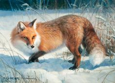 Winter Fox Art Prints by Nancy Glazier Artist. A stealthy fox is standing in the snow with his ears tall listening for the slightest sound so he can get some food for win Wildlife Paintings, Wildlife Art, Animal Paintings, Animal Drawings, Fox Spirit, Spirit Animal, Art Fox, Image Fruit, Image Halloween