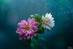 Love Begins Here von Miki Asai auf 500px