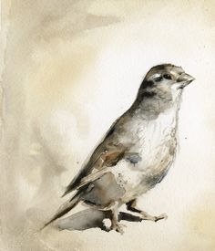loving this watercolor of a sparrow. Time to break out the old watercolors and see if I can recreate this!