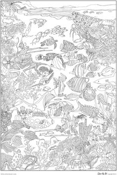 great barrier reef coloring pages - coral reef creative coloring page google search