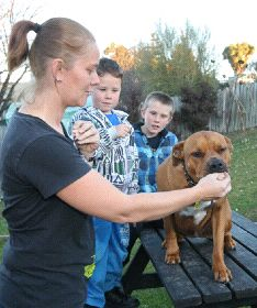 Surfers save family #dog from being swept out to sea via dogheirs.com #rescue via @dog heirs