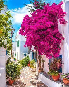 Paros, Greece 👍 katalay.net/amazing-places/ #Paros #Greece Hotels In Santorini Greece, Fira Santorini, Paros Greece, Santorini Wedding, Mykonos, Greece Vacation, Greece Travel, Greece Trip, Bougainvillea