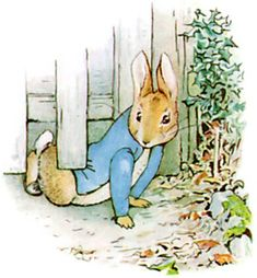 But Peter, who was very naughty, ran straight away to Mr. McGregor's garden, and squeezed under the gate!