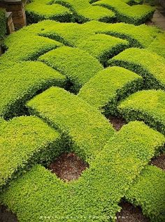 knot garden, so cool!