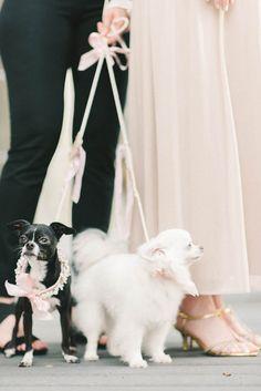 dog flower girls - photo by Elizabeth Fogarty http://ruffledblog.com/romantic-vintage-inspired-wedding-in-maryland