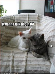 He doesn't want to talk about it. Nice of pretty white kitty to offer, though. :)